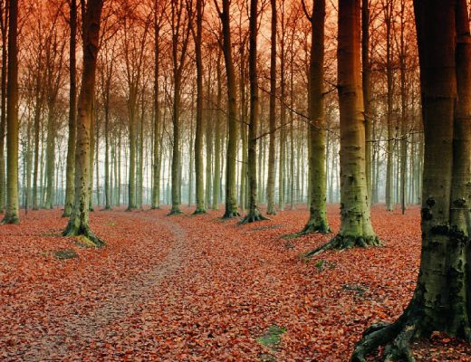 The Netherlands in Autumn: 15 must-do's | Your Dutch Guide