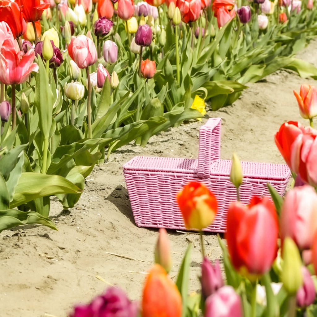 The Tulip Barn, Hillegom | Your Dutch Guide
