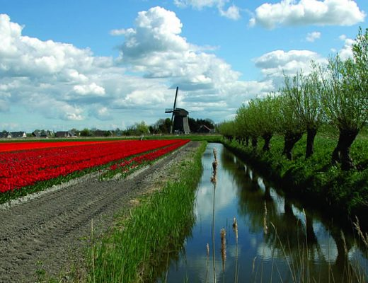 10 things you didn't know about Holland's Tulip Fields | Your Dutch Guide