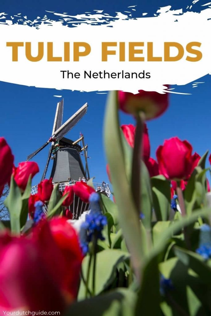 Tulip fields Netherlands | Everything you need to know about Holland tulip fields | Your Dutch Guide