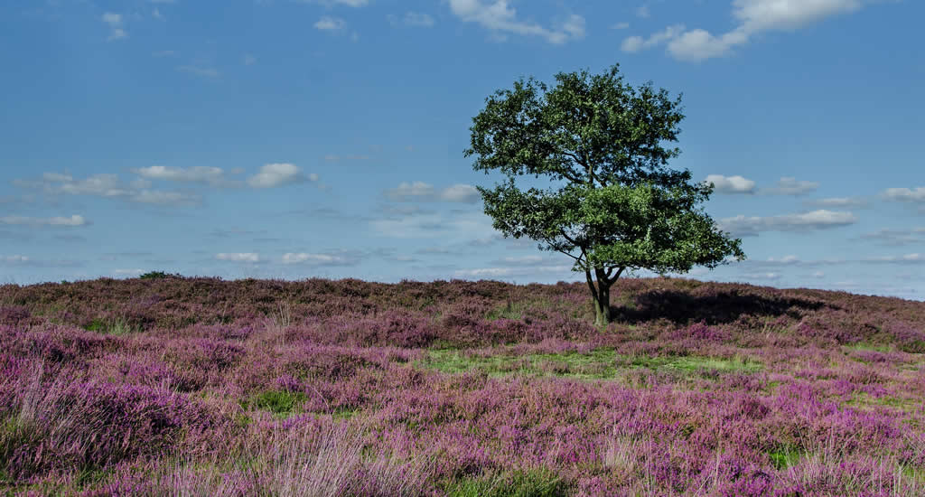 Dutch moorlands, what to do in The Netherlands in autumn | Your Dutch Guide