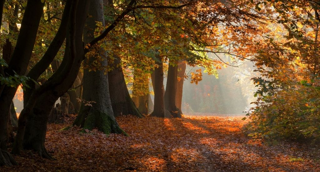 Autumn in The Netherlands, fall colours The Netherlands | Your Dutch Guide