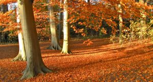 Autumn in The Netherlands   The best places to visit in The Netherlands in autumn   Your Dutch Guide
