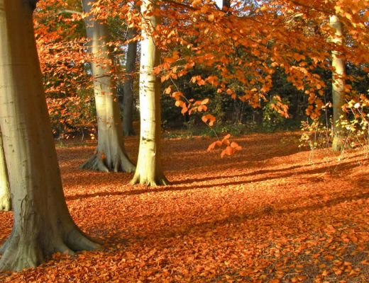 Autumn in The Netherlands | The best places to visit in The Netherlands in autumn | Your Dutch Guide