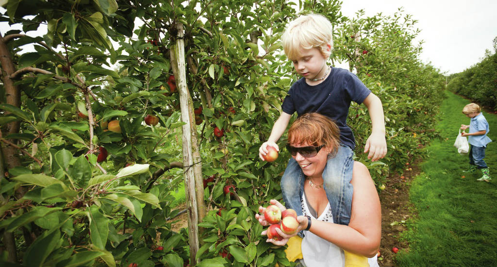 Apple picking in The Netherlands | Your Dutch Guide