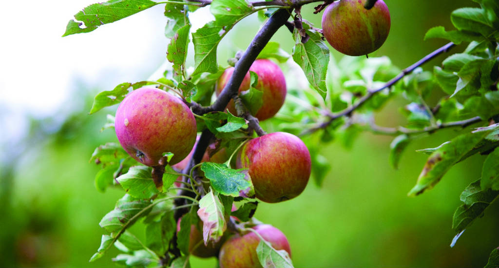 The Netherlands in autumn, where to go apple picking | Your Dutch Guide