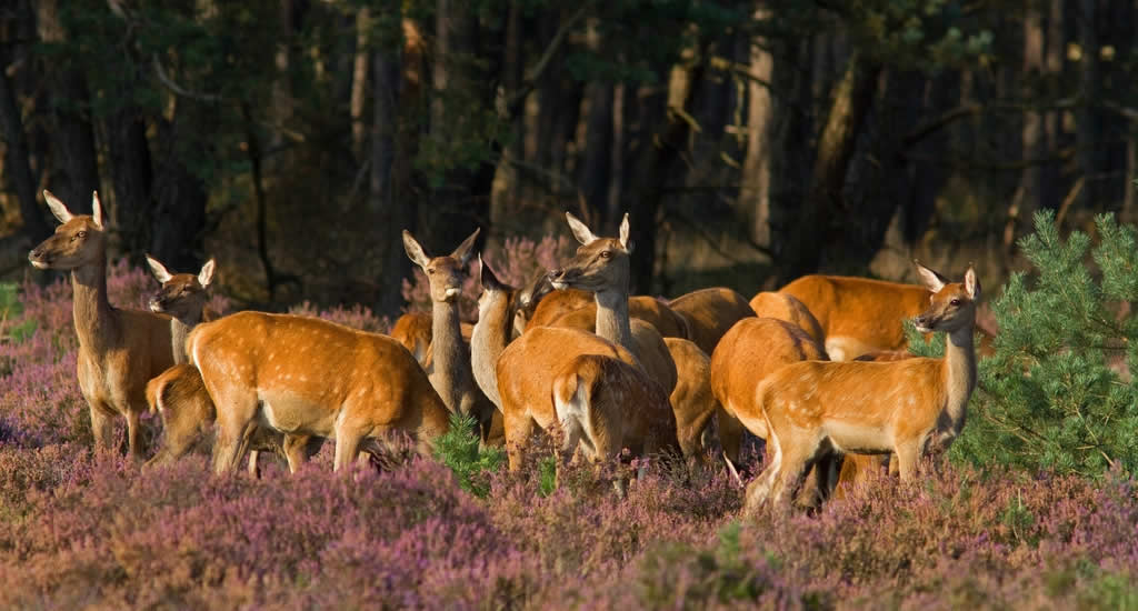 Autumn The Netherlands, visit Hoge Veluwe National Park | Your Dutch Guide