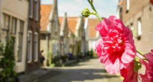 Zierikzee, The Netherlands | What to see in Zierikzee, The Netherlands | Your Dutch Guide