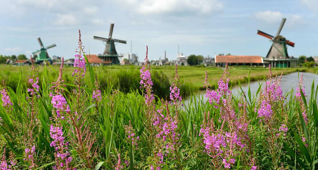 Zaanse Schans, The Netherlands | Your Dutch Guide