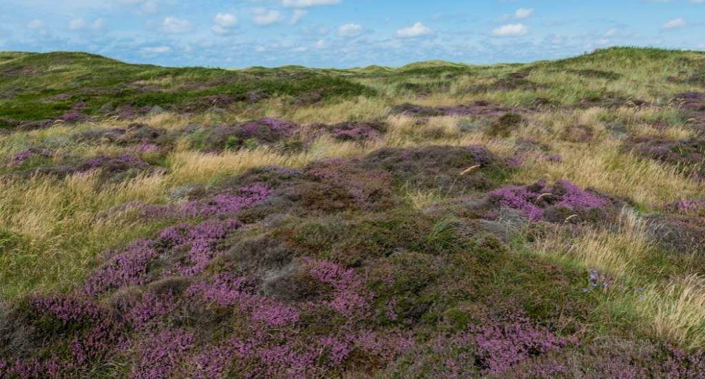 Texel, The Netherlands | Your Dutch Guide
